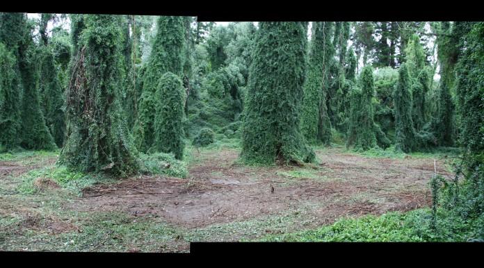 WOLVERINE Film  wolverine 10a